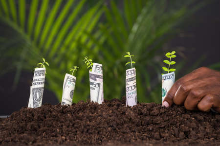 black hands: Close-up Of Persons Hand Planting Sapling Rolled With Banknote