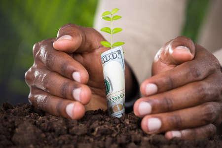 사람의 손을 보호하는 식물의 근접 지폐와 함께 압 연