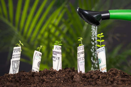 Water Pouring On Plant Rolled With Banknote From Watering Can Stock Photo
