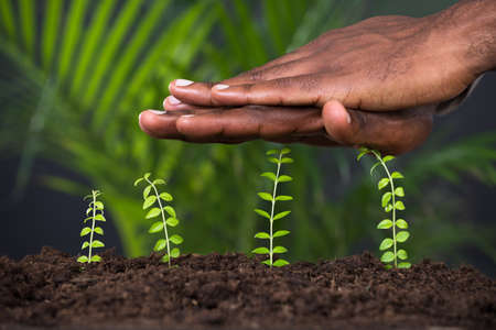 environment protection: Close-up Of Persons Hand Protecting Plant On Ground