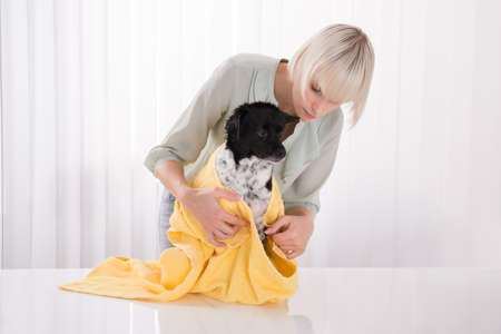 house trained: Young Woman Drying Her Dog With Yellow Towel Stock Photo