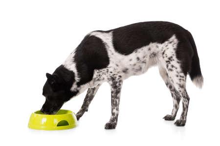perro comiendo: Perro que come el alimento de la taza sobre el fondo blanco Foto de archivo