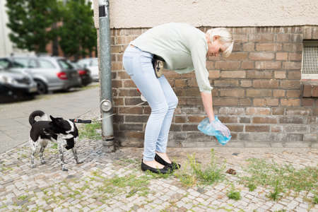 excrement: Young Woman With Plastic Bag Cleaning Dog Feces