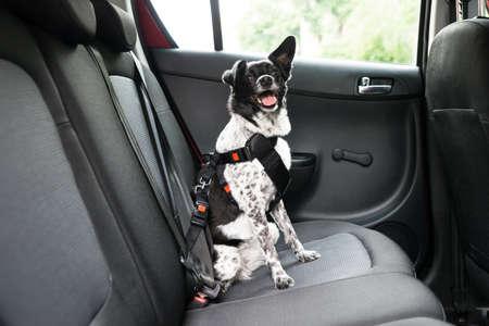 Perro Con Sacar la lengua que se sienta en un asiento de coche