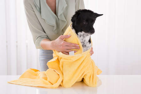 house trained: Close-up Of Woman Drying Her Dog With Towel At Home