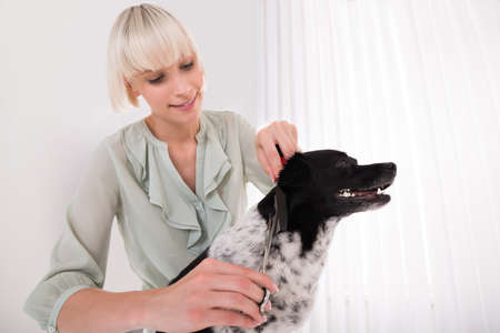 house trained: Young Happy Woman Grooming Her Dog At Home