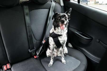 Hond Met Tong in een auto zit Seat
