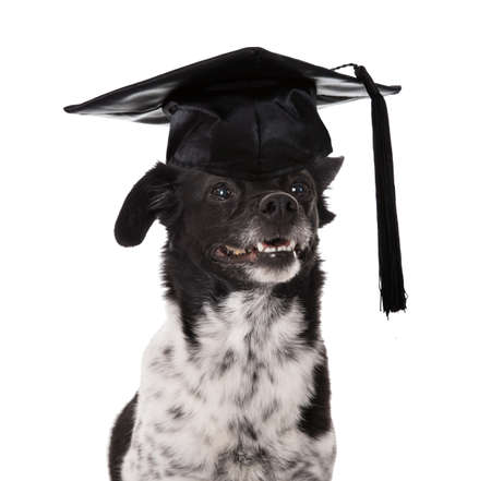 graduated: Graduated Dog Wearing Mortar Board Over White Background
