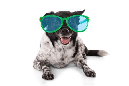 adopt: Dog With Sunglasses Lying On White Background