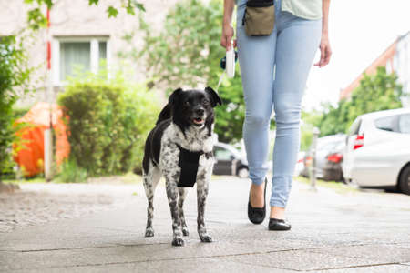 Young Woman Walking With Her Dog On Street