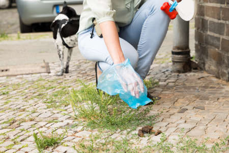 feces: Close-up Of Female Hand Picking Up Dog Feces With Plastic Bag
