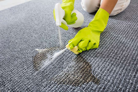sponge: Person Hand Wearing Gloves Spraying Detergent On Grey Carpet Or Rug To Remove Stain