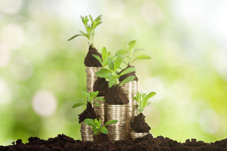 Close-up Of A Small Plant Growing On A Stacked Coins Stock Photo