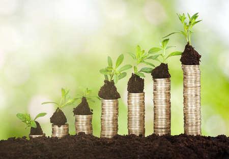 A に成長する小さな植物のクローズ アップは土行でコインを積み上げ