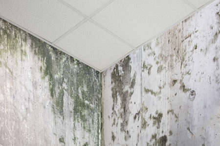 Close-up Photo Of Wall Corner With Mold