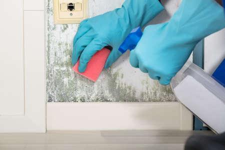 Close-up d'un moule Personne Main Nettoyage De mur Utilisation flacon pulvérisateur et éponge