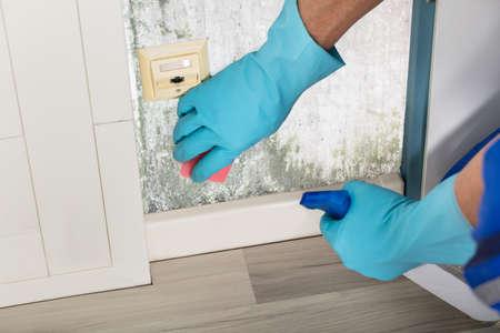 Close-up einer Person Handreinigungs Mold Von Wand mit Sprühflasche und Schwamm