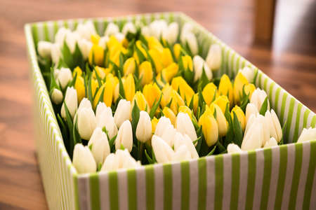 Close-up Of Tulips In The Open Gift Box On Hardwood Floor