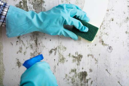 Huishoudster Hand met handschoen schoonmaak schimmel van muur met spons en Spray fles
