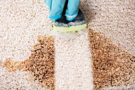 High Angle View Of A Person Wearing Gloves Cleaning Spilled Coffee On Carpet With Sponge