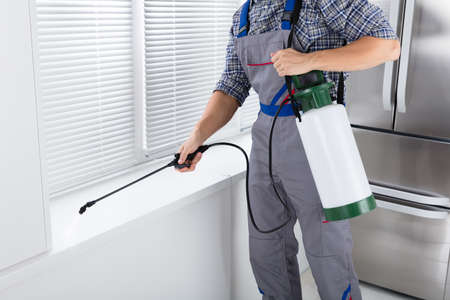 Midsection Of Worker Spraying Insecticide On Windowsill With Sprayer In Kitchen Archivio Fotografico