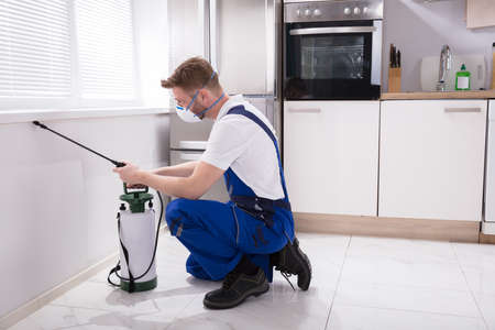 Young Male Exterminator Worker Spraying Insecticide Chemical In Kitchen Archivio Fotografico