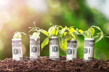 Saplings Covered With Rolled Up American Banknotes On Soil Stock Photo