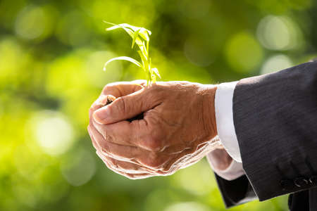 Close-up Of A Businessmans Hand Holding Plant With Soil