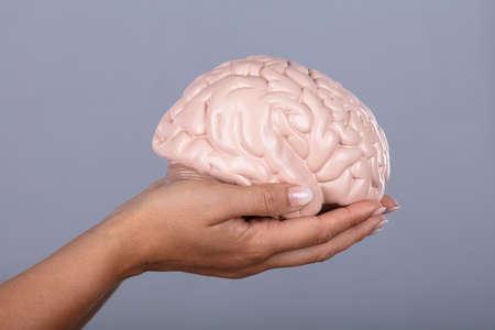 Human Hand Holding Human Brain Model Against Grey Background