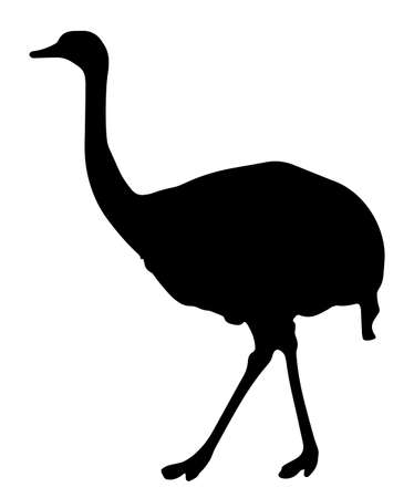 Vector Illustration Of An Ostrich Walking On White Background