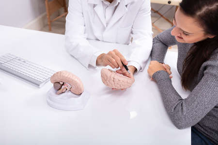 Doctor Explaining Details Of Human Brain To Happy Woman With Model Фото со стока