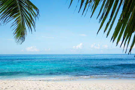 Close-up Of Palm Leaves Of A Tree Over The Sandy Idyllic Beach Stockfoto