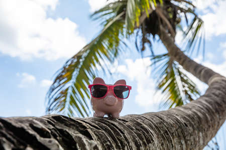 Pink Piggybank With Sunglasses On Crooked Palm Tree Trunk Against Blue Sky