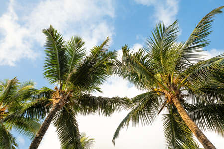 Ángulo de visión baja de palmeras en Anse Intendance Beach, Mahe Island, Seychelles