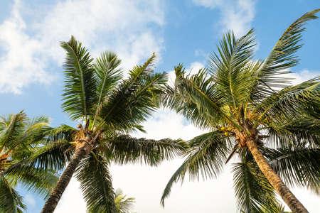 Basso angolo vista di palme su Anse Intendance Beach, Isola di Mahe, Seychelles