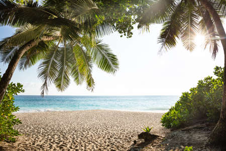Palm Trees On Anse Intendance Beach, Mahe Island, Seychelles Stockfoto