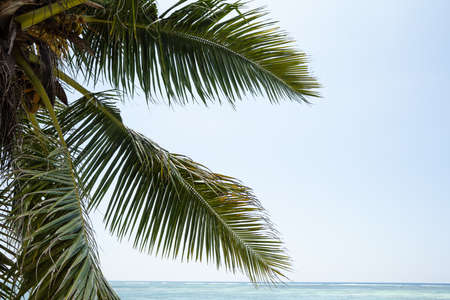 Green Coconut Palm Tree Leaves Against Sky Stockfoto - 124798313