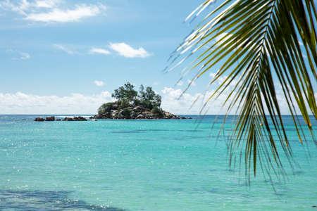 Palm Leaves At Anse Royale Beach, Mahe Island, Seychelles Stockfoto - 124798319