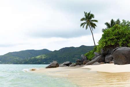 Coconut Trees At Anse Royale Beach, Mahe Island, Seychelles Stockfoto - 124798320