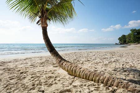 Close-up Of Crooked Palm Tree On Baie Beau Vallon, Mahe Island, Seychelles Stockfoto - 124798322