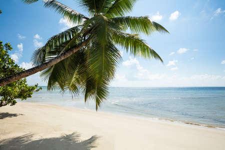 Coconut Trees At Turtle Bay Beach, Mahe Island, Seychelles Stockfoto - 124798417