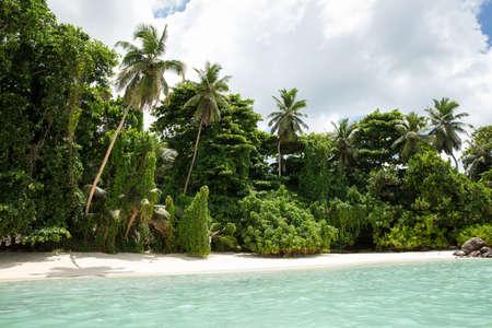 Palm Trees At Anse Royale Beach, Mahe Island, Seychelles Stockfoto - 124798421