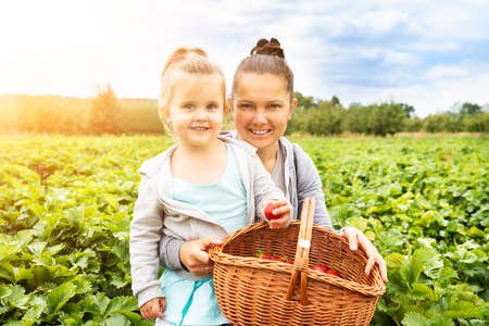 Girl Picking Strawberries Together With Her Mother In The Garden Banque d'images