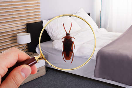 Close-up Of A Person Looking At Cockroach With Magnifying Glass On Bed