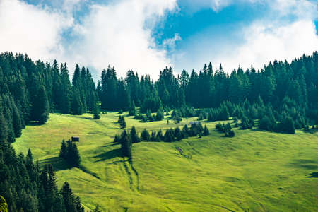 Pasture Grass Field In Austrian Alps In Summer Stockfoto
