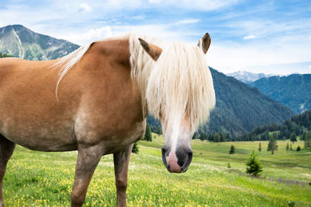Horse In Mountains In Summer On A Sunny Day