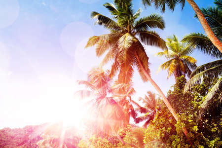 Scenic View Of Palm Trees With Lens Flare Against Clear Blue Sky