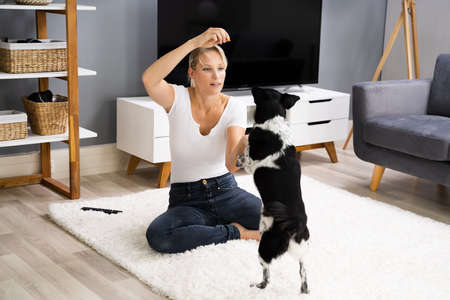 Woman Training And Playing With Pet Dog At Home