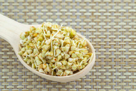 Sprouted green buckwheat seeds in a wooden spoon Banque d'images