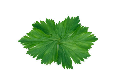 Parsley leaves close-up isolate on a white background Stock fotó